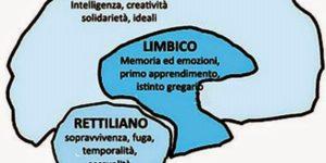 Cervello-rettiliano